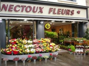 Nectoux Fleurs